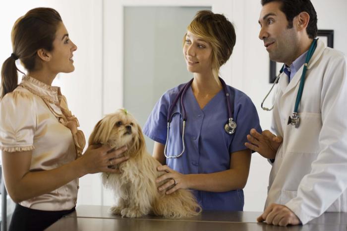 come-portare-il-cane-dal-veterinario_97020c1255a91bb0169f061bb00dacf1